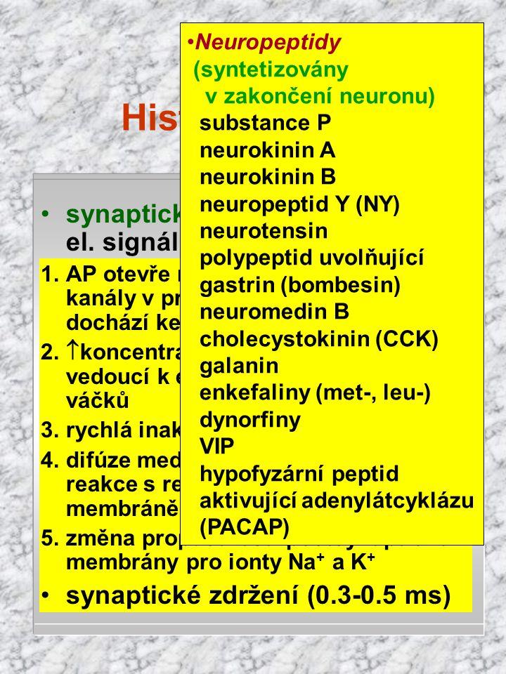 Histofyziologie akční potenciál akční potenciál refrakterní fáze