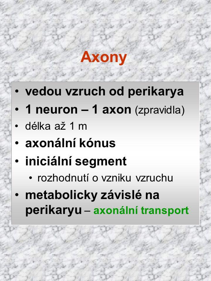 Axony vedou vzruch od perikarya 1 neuron – 1 axon (zpravidla)