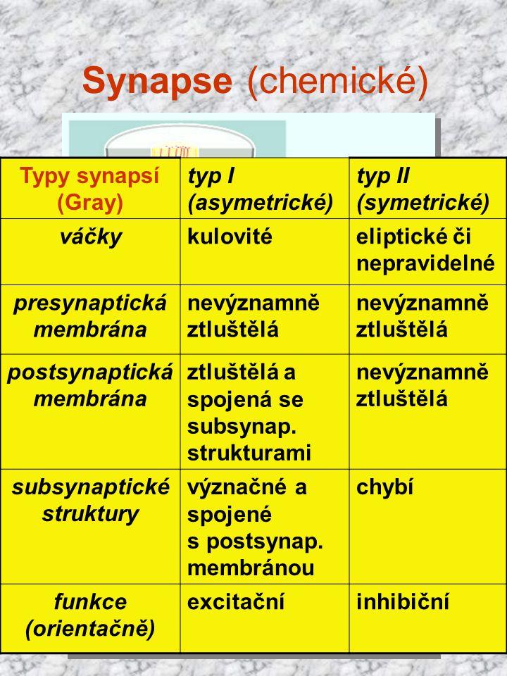 presynaptická membrána postsynaptická membrána subsynaptické struktury