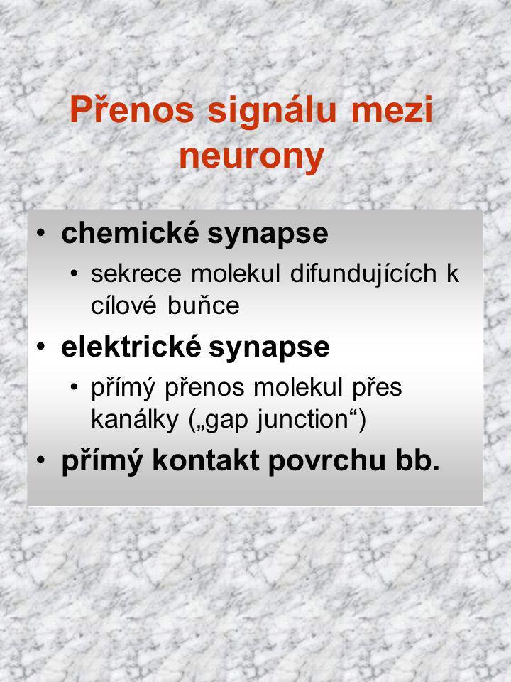 Přenos signálu mezi neurony