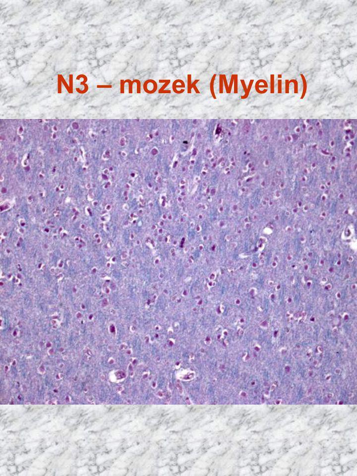 N3 – mozek (Myelin) HE x 400