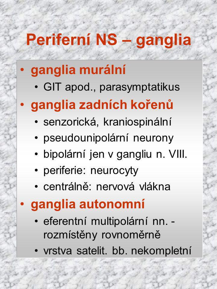 Periferní NS – ganglia ganglia murální ganglia zadních kořenů