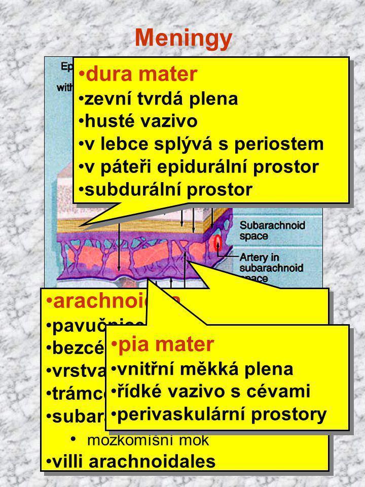 Meningy dura mater arachnoidea pia mater zevní tvrdá plena