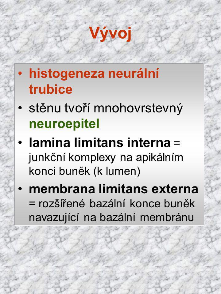Vývoj histogeneza neurální trubice