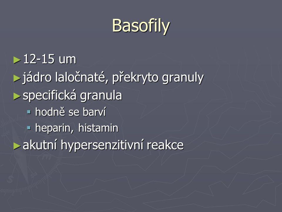 Basofily 12-15 um jádro laločnaté, překryto granuly specifická granula