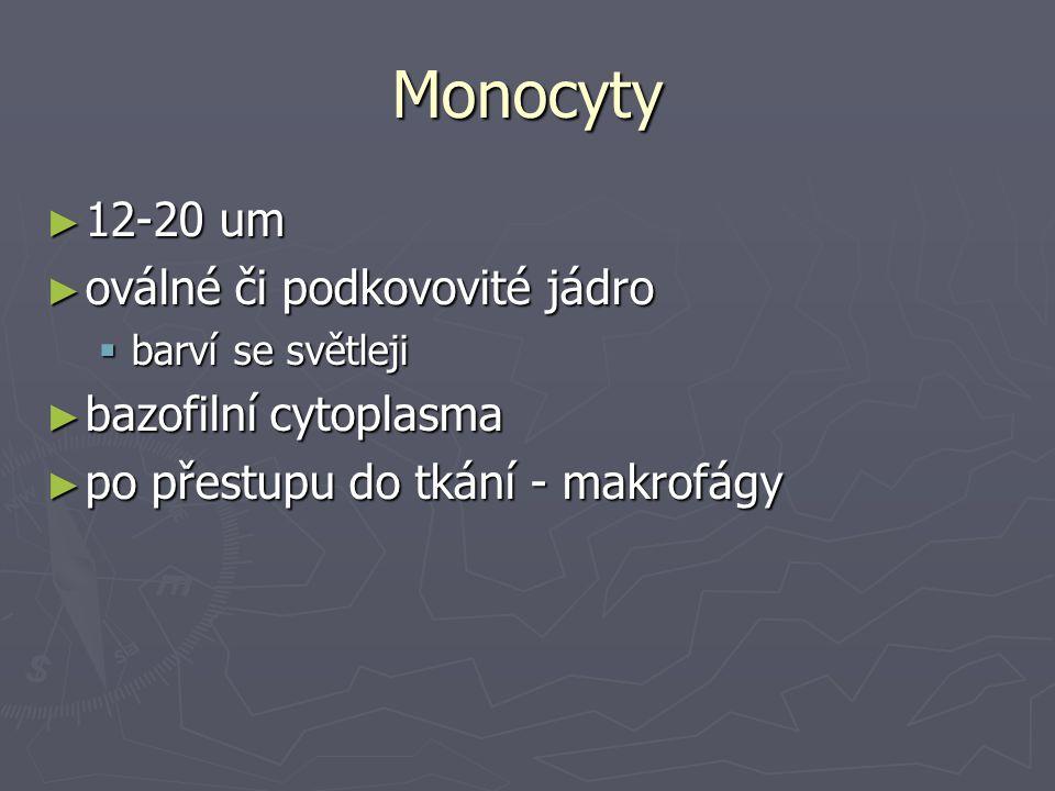 Monocyty 12-20 um oválné či podkovovité jádro bazofilní cytoplasma