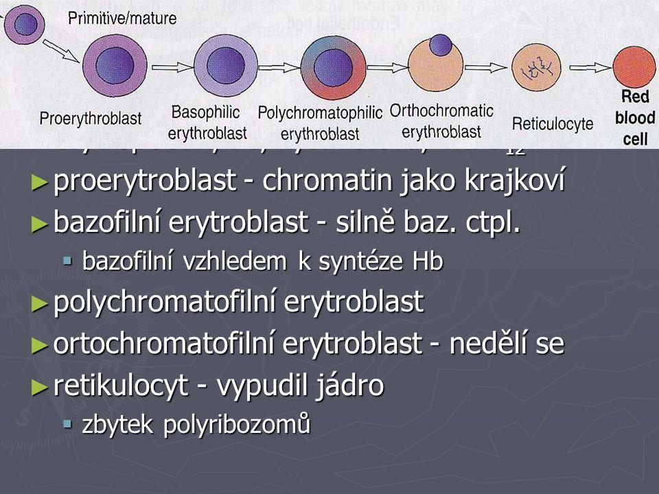 Vyzrávání erytrocytů erytropoetin, Fe, kys. listová, vit. B12