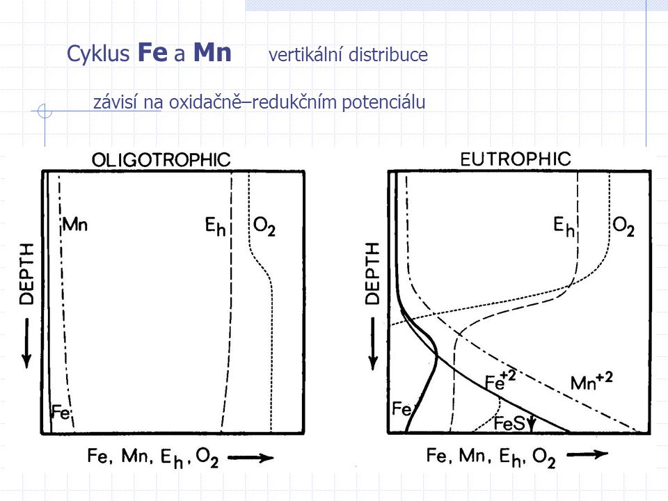 Cyklus Fe a Mn vertikální distribuce