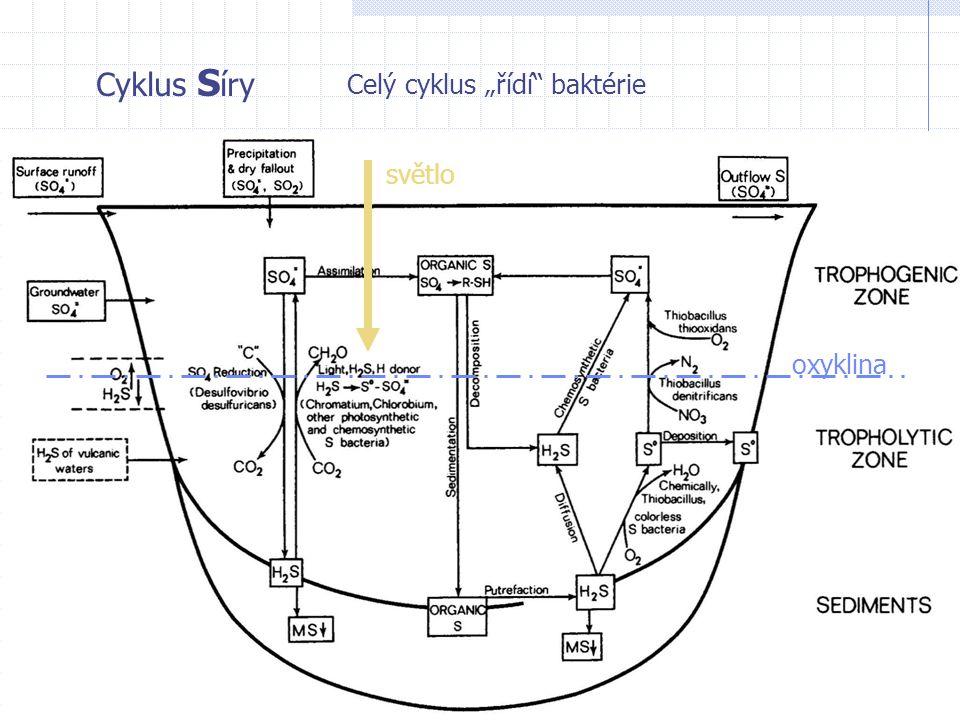 """Cyklus Síry Celý cyklus """"řídí baktérie světlo oxyklina"""
