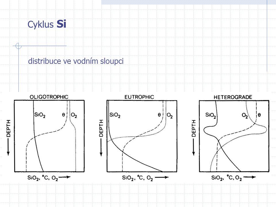 Cyklus Si distribuce ve vodním sloupci