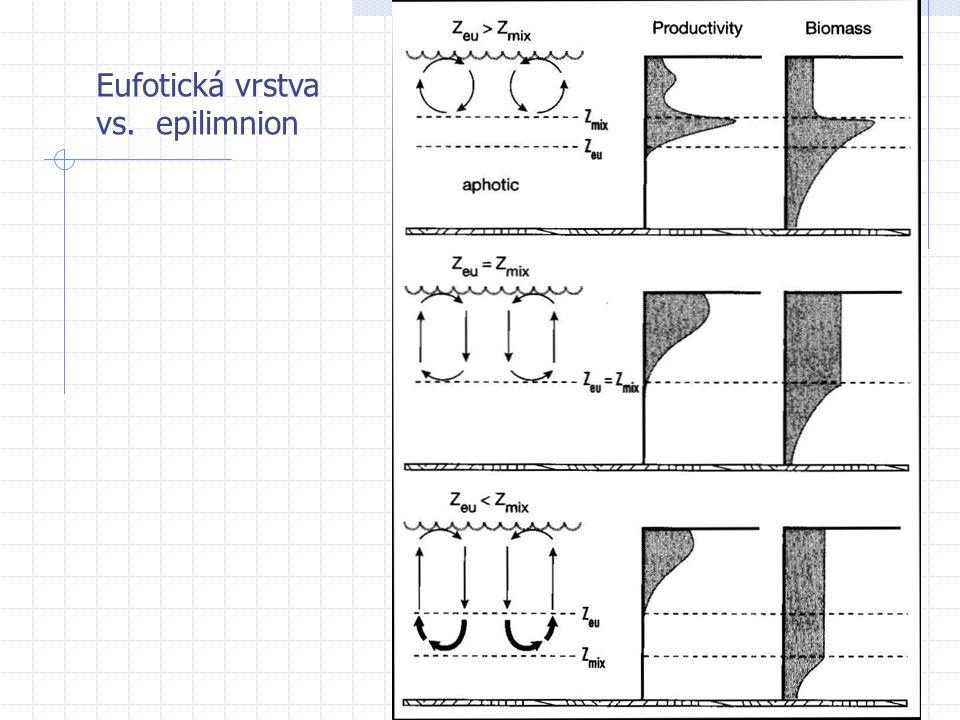 Eufotická vrstva vs. epilimnion