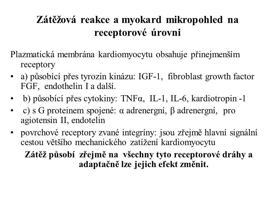 Zátěžová reakce a myokard mikropohled na receptorové úrovni