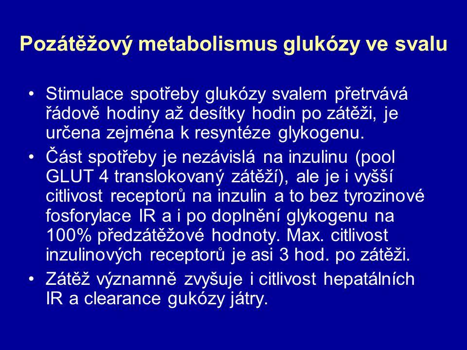 Pozátěžový metabolismus glukózy ve svalu