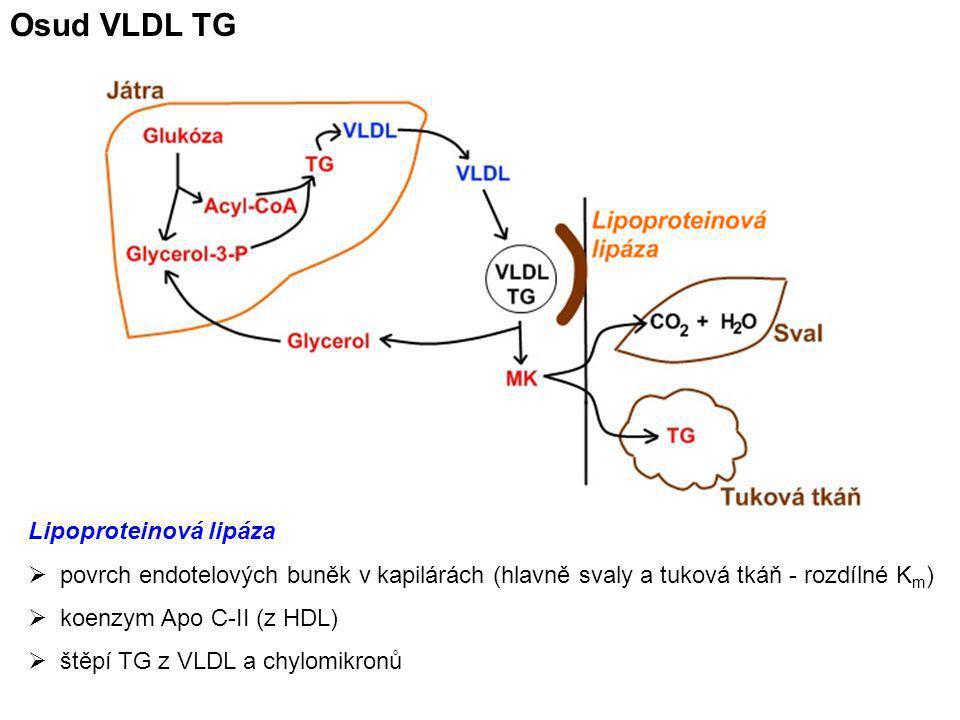 Osud VLDL TG Lipoproteinová lipáza