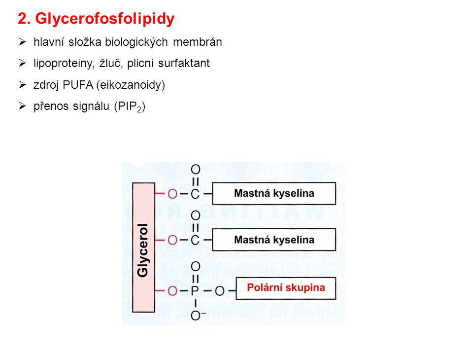 2. Glycerofosfolipidy hlavní složka biologických membrán