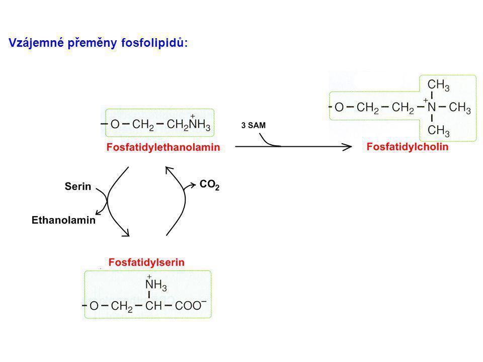 Vzájemné přeměny fosfolipidů: