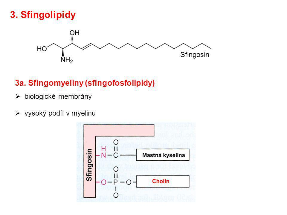 3. Sfingolipidy 3a. Sfingomyeliny (sfingofosfolipidy) Sfingosin