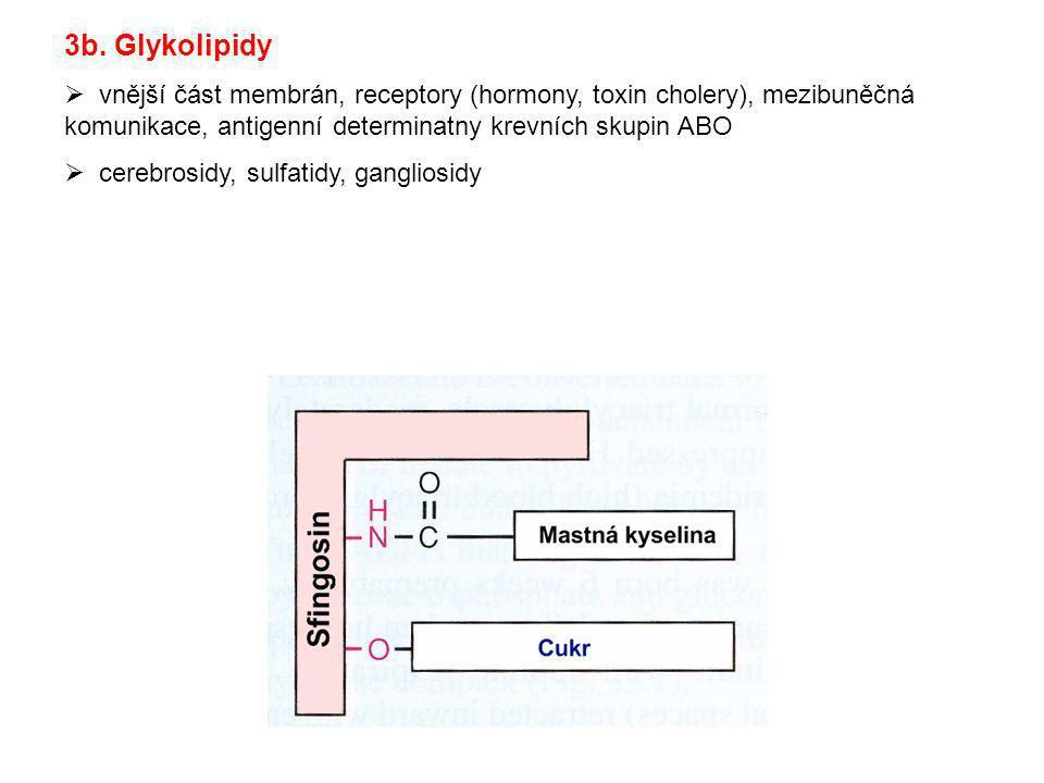 3b. Glykolipidy vnější část membrán, receptory (hormony, toxin cholery), mezibuněčná komunikace, antigenní determinatny krevních skupin ABO.