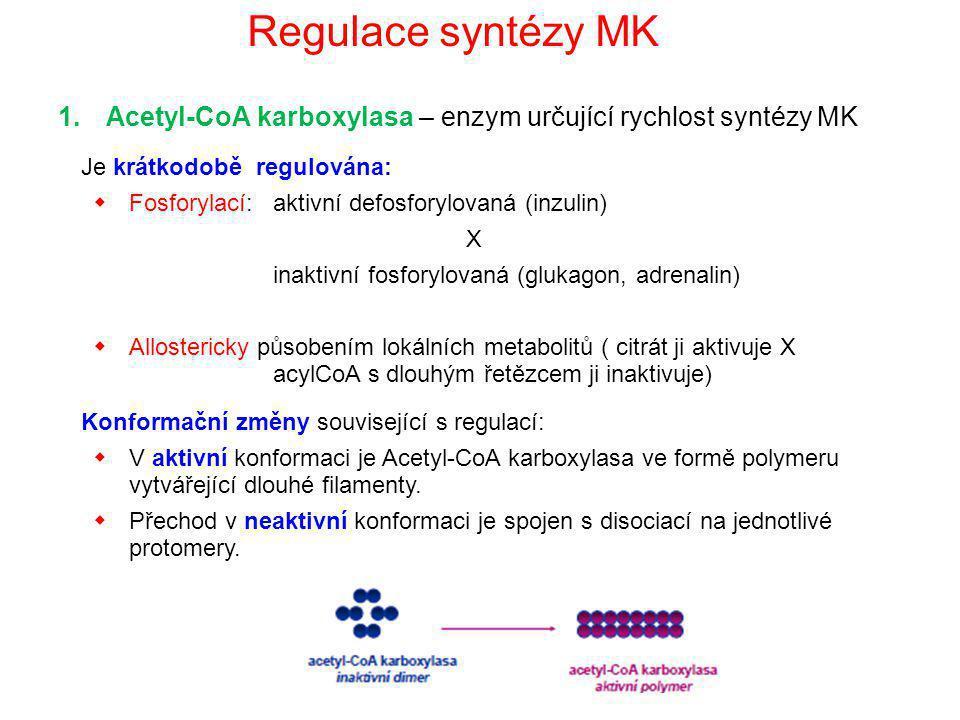 Regulace syntézy MK Acetyl-CoA karboxylasa – enzym určující rychlost syntézy MK. Je krátkodobě regulována: