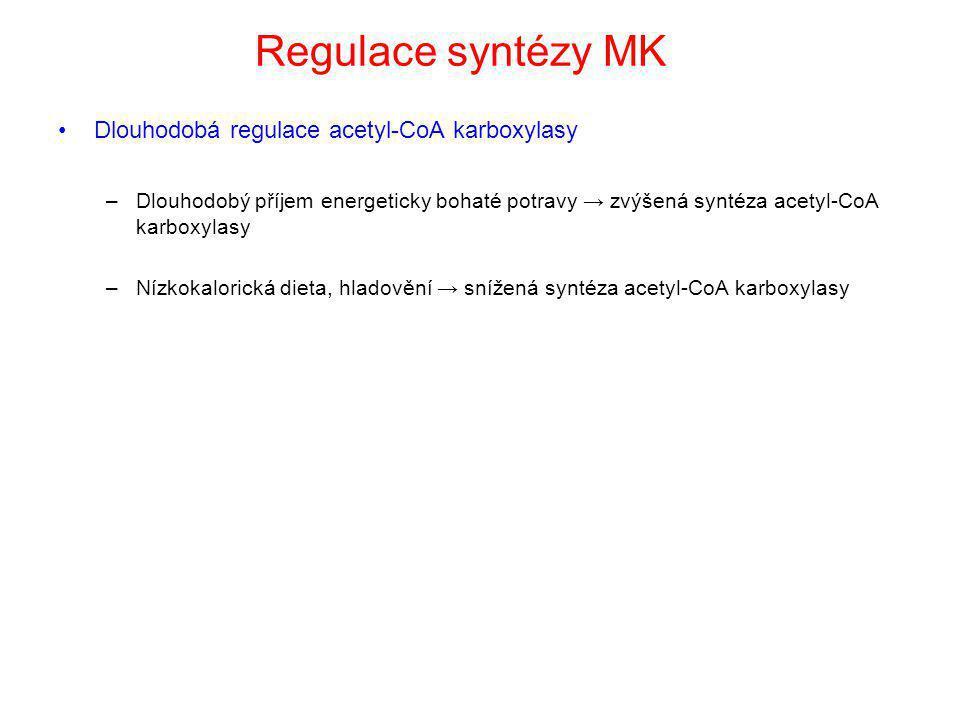 Regulace syntézy MK Dlouhodobá regulace acetyl-CoA karboxylasy