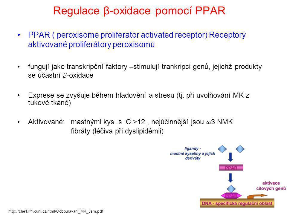 Regulace β-oxidace pomocí PPAR