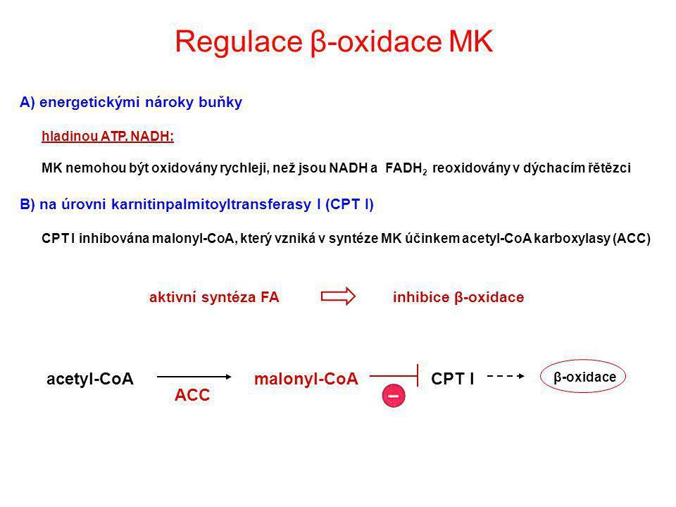 Regulace β-oxidace MK acetyl-CoA malonyl-CoA CPT I ACC