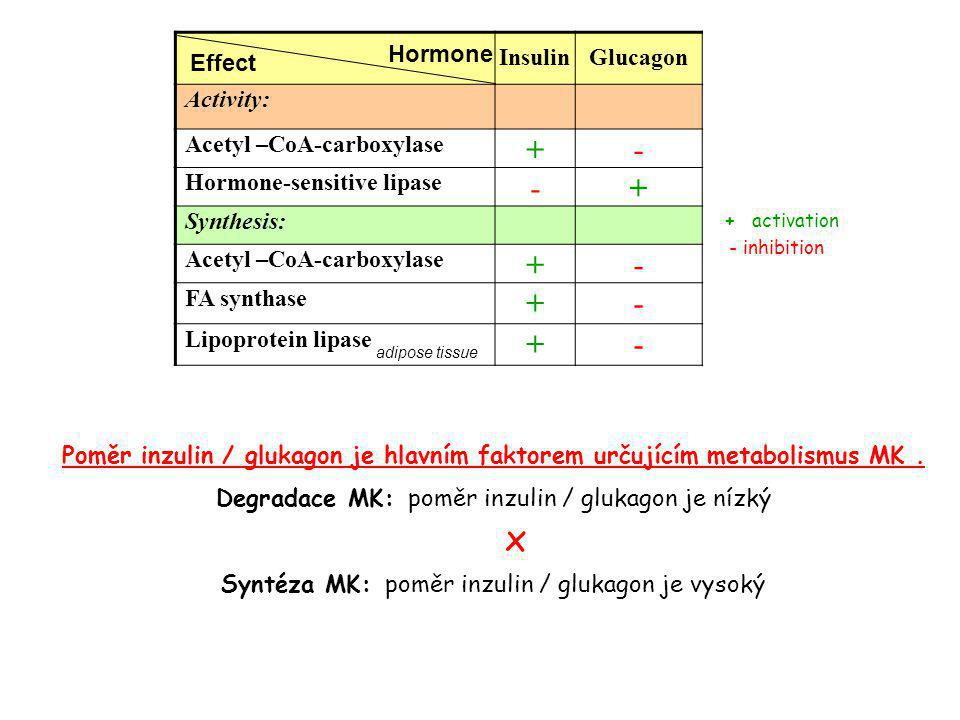 x + - Insulin Glucagon Activity: Acetyl –CoA-carboxylase