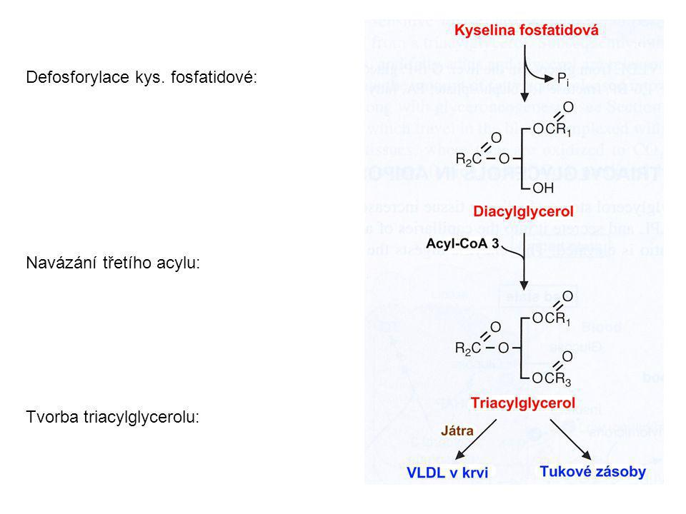 Defosforylace kys. fosfatidové: