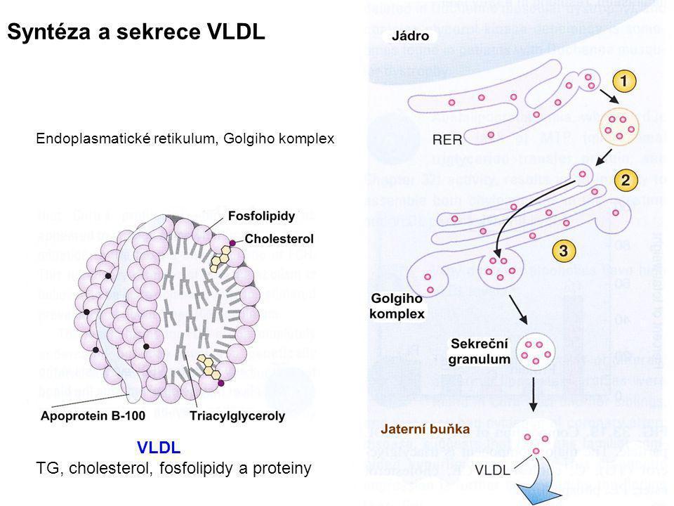 Syntéza a sekrece VLDL TG, cholesterol, fosfolipidy a proteiny VLDL