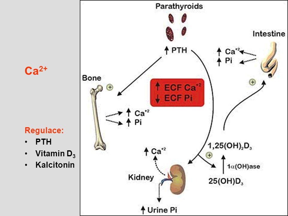 Ca2+ Regulace: PTH Vitamin D3 Kalcitonin