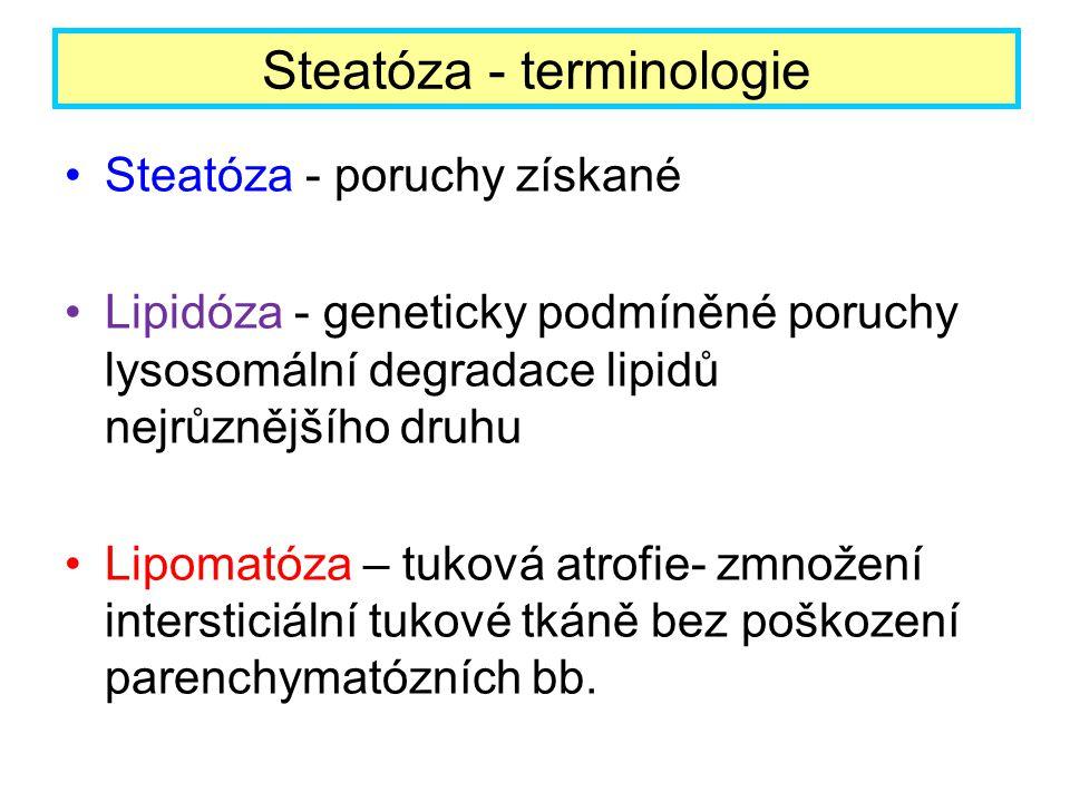 Steatóza - terminologie