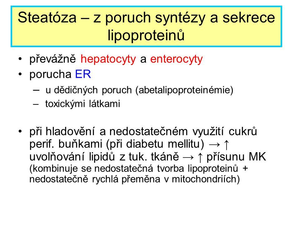 Steatóza – z poruch syntézy a sekrece lipoproteinů