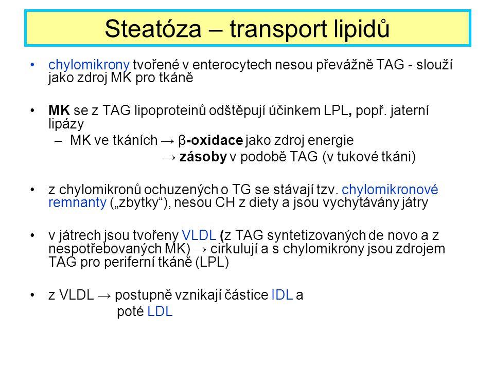 Steatóza – transport lipidů