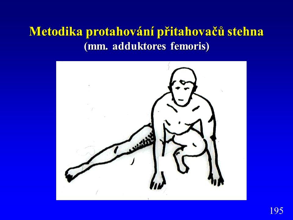 Metodika protahování přitahovačů stehna (mm. adduktores femoris)