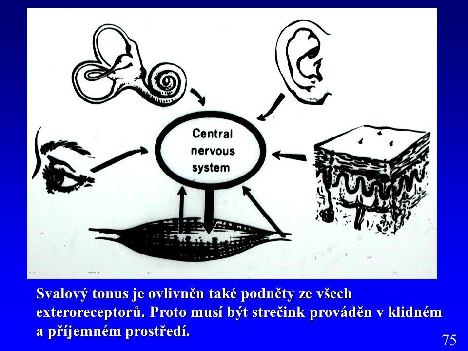 Svalový tonus je ovlivněn také podněty ze všech exteroreceptorů
