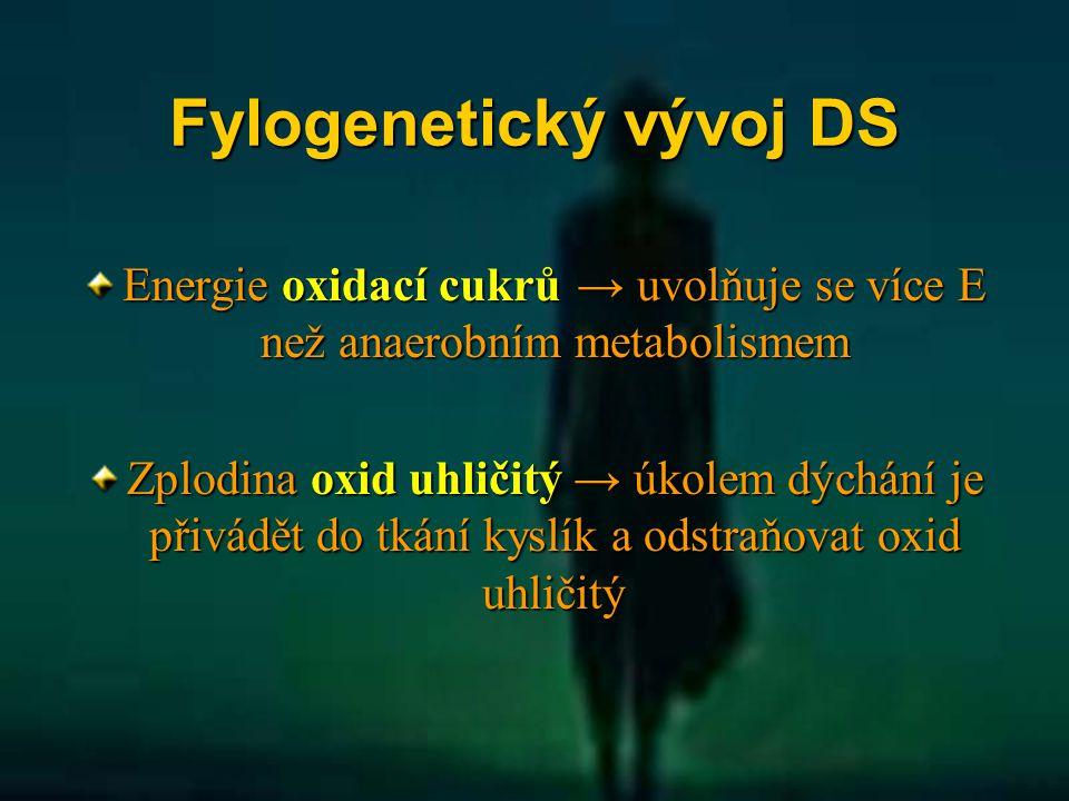 Fylogenetický vývoj DS