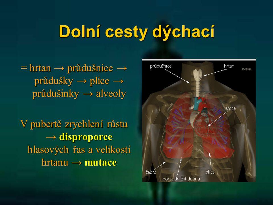 = hrtan → průdušnice → průdušky → plíce → průdušinky → alveoly