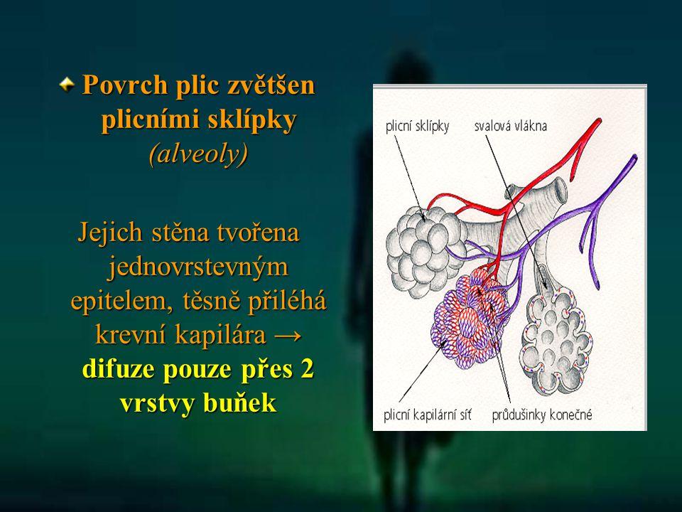 Povrch plic zvětšen plicními sklípky (alveoly)