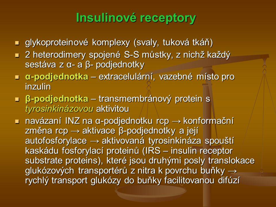 Insulinové receptory glykoproteinové komplexy (svaly, tuková tkáň)