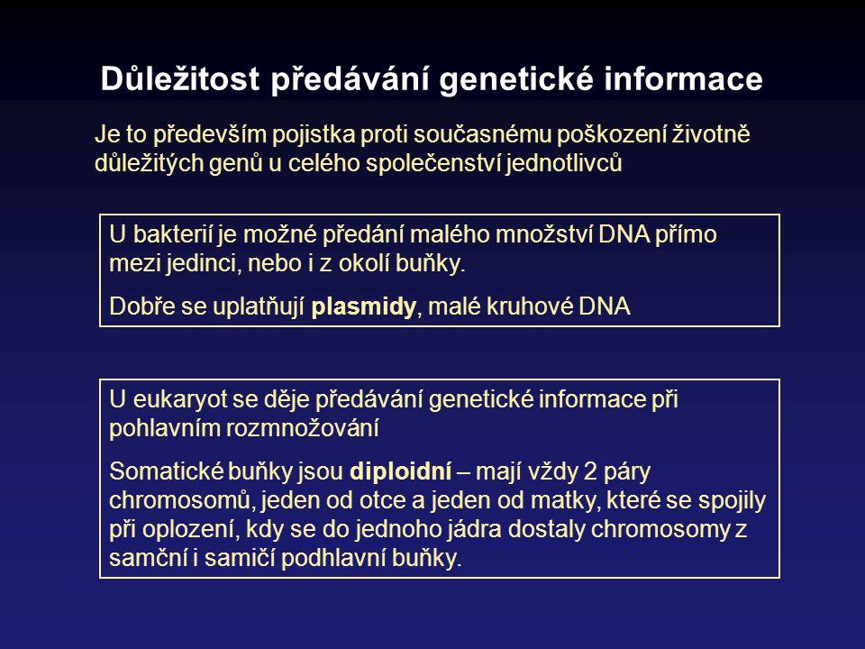Důležitost předávání genetické informace