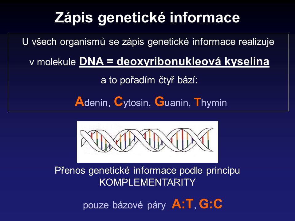 Zápis genetické informace
