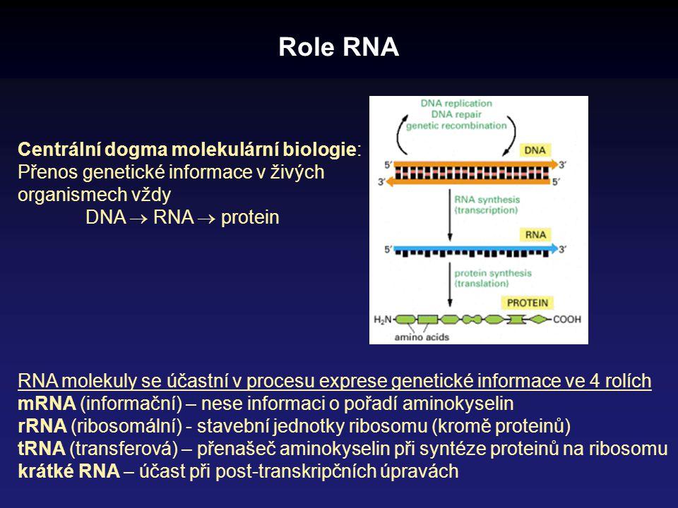 Role RNA Centrální dogma molekulární biologie: