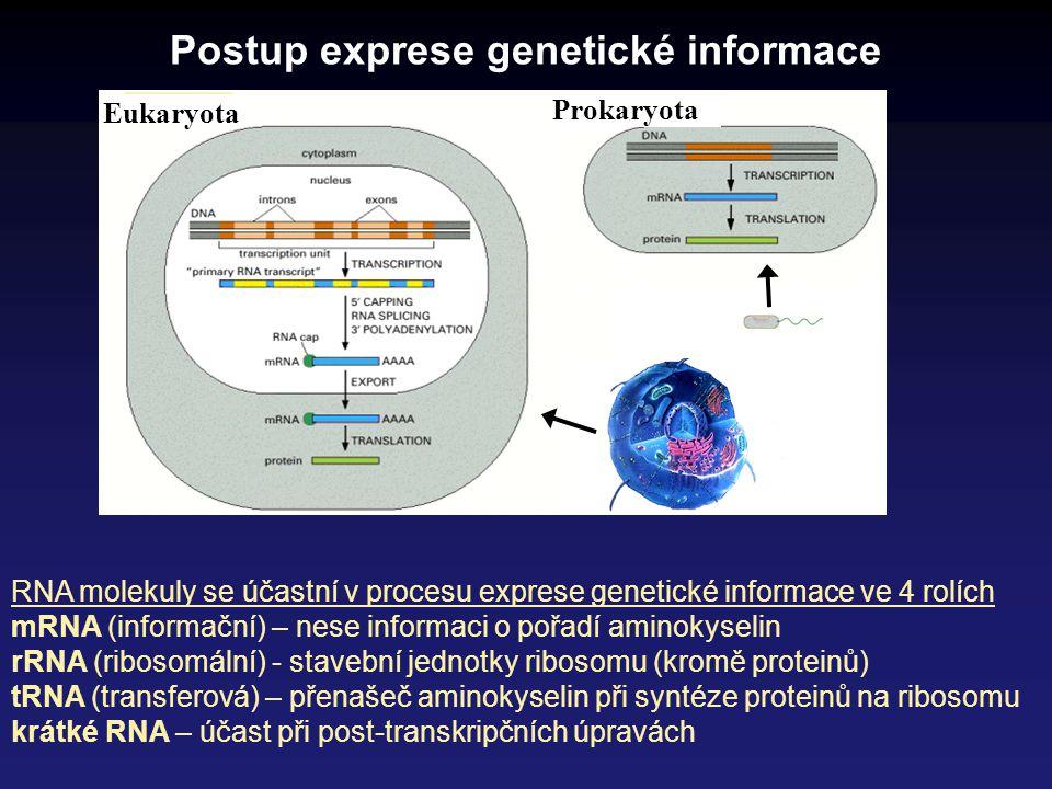 Postup exprese genetické informace