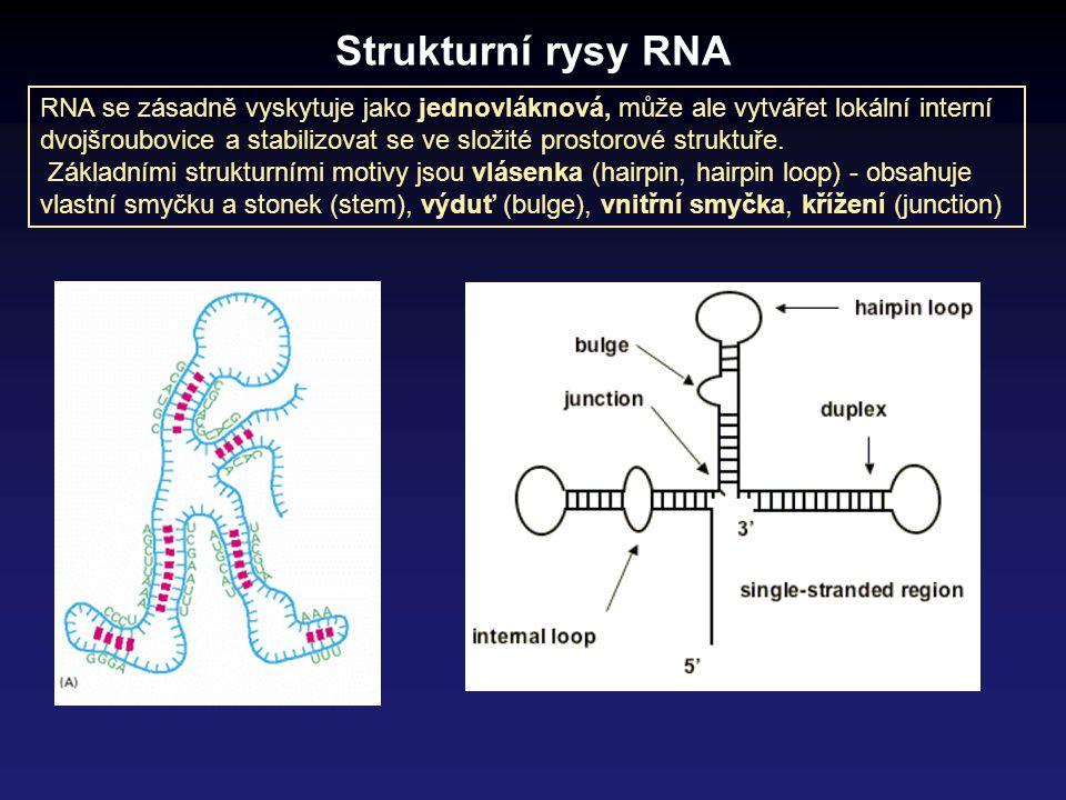 Strukturní rysy RNA