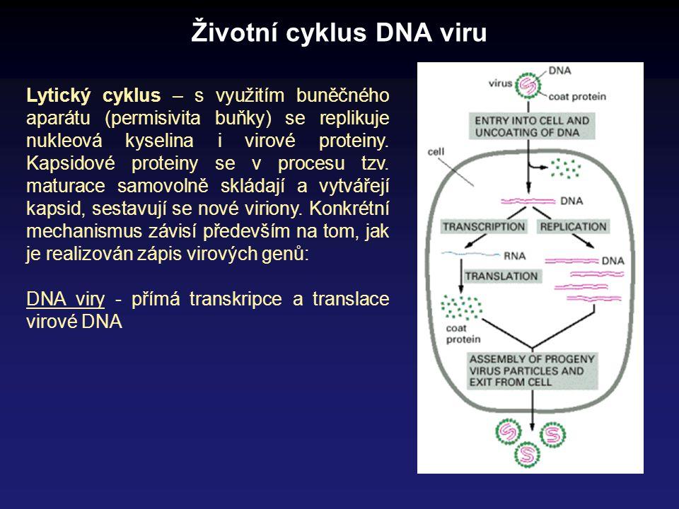 Životní cyklus DNA viru