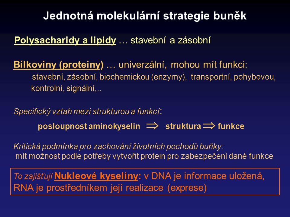 Jednotná molekulární strategie buněk