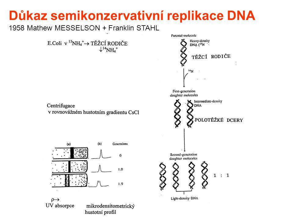 Důkaz semikonzervativní replikace DNA