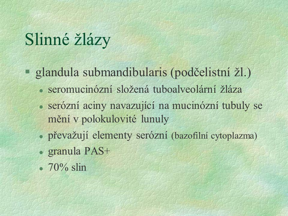 Slinné žlázy glandula submandibularis (podčelistní žl.)