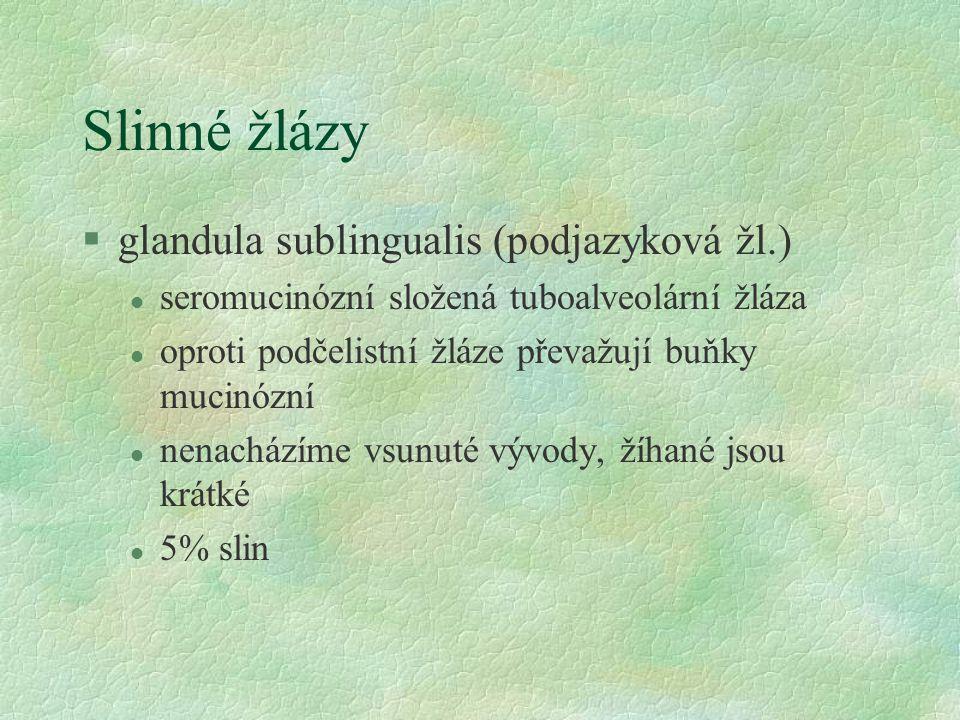 Slinné žlázy glandula sublingualis (podjazyková žl.)