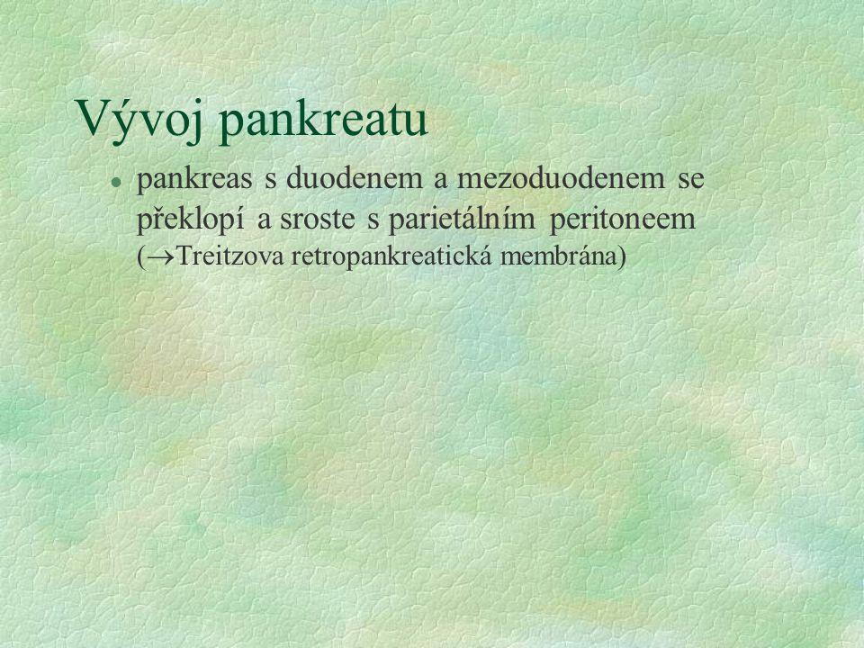 Vývoj pankreatu pankreas s duodenem a mezoduodenem se překlopí a sroste s parietálním peritoneem (Treitzova retropankreatická membrána)